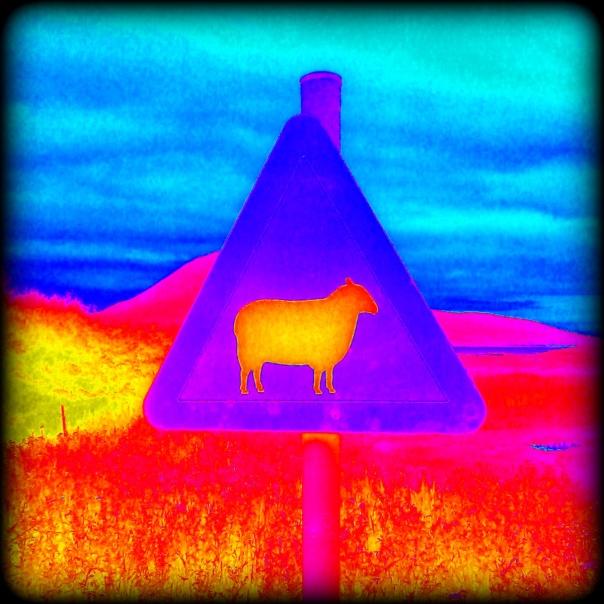 sheepcolorburst